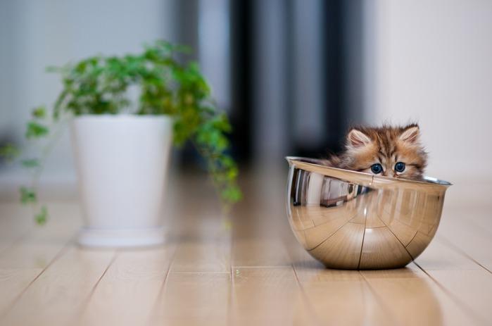 смешные котята фото 12 (699x463, 43Kb)