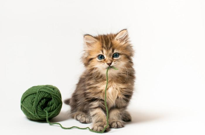 смешные котята фото 14 (700x464, 41Kb)