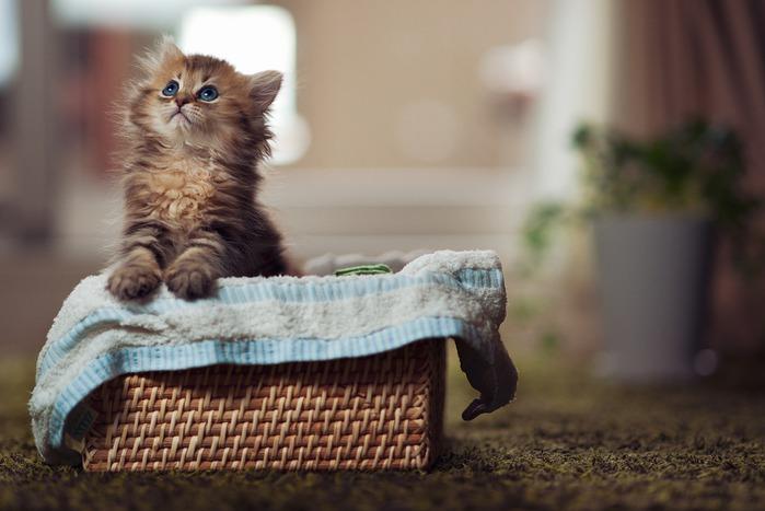 смешные котята фото 20 (699x467, 72Kb)
