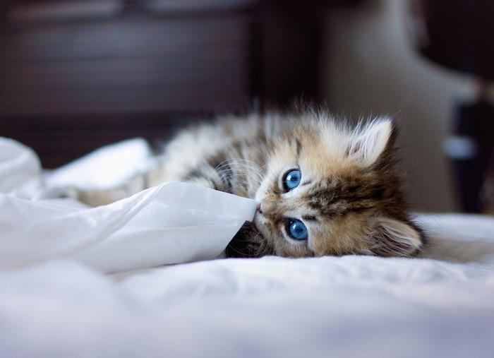 смешные котята фото 22 (700x507, 53Kb)
