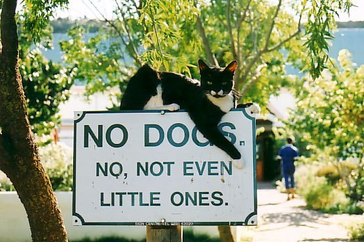 кошки прикольные картинки/3185107_smeshnie_koshki_kartinki (522x348, 65Kb)