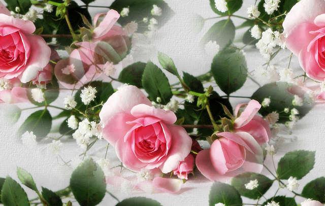 Название: Розовые розы-2