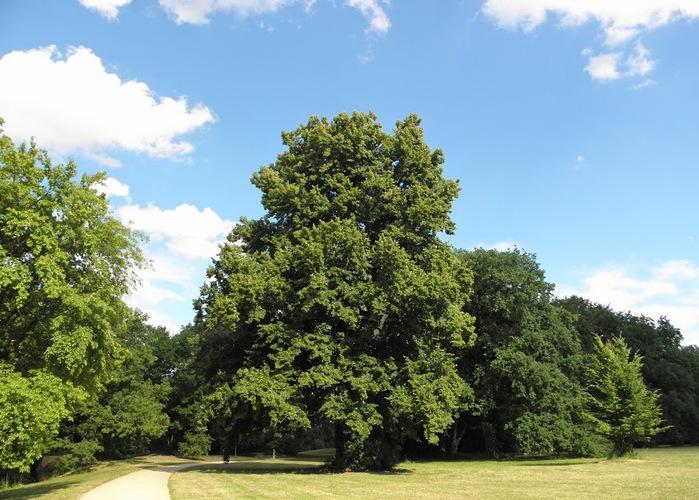 Парк и замок Браниц 68451