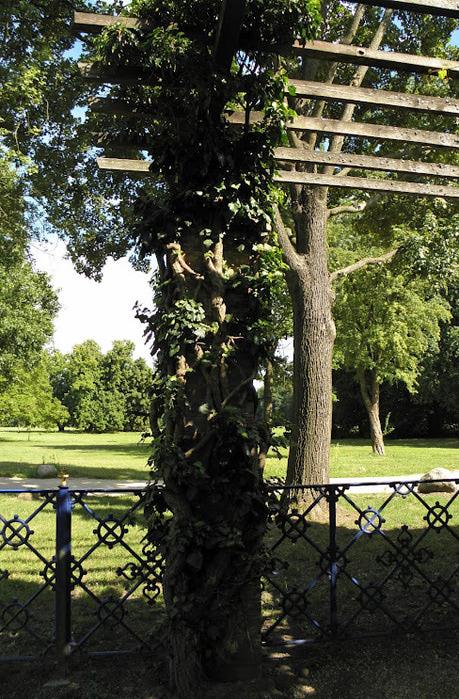 Парк и замок Браниц 58312