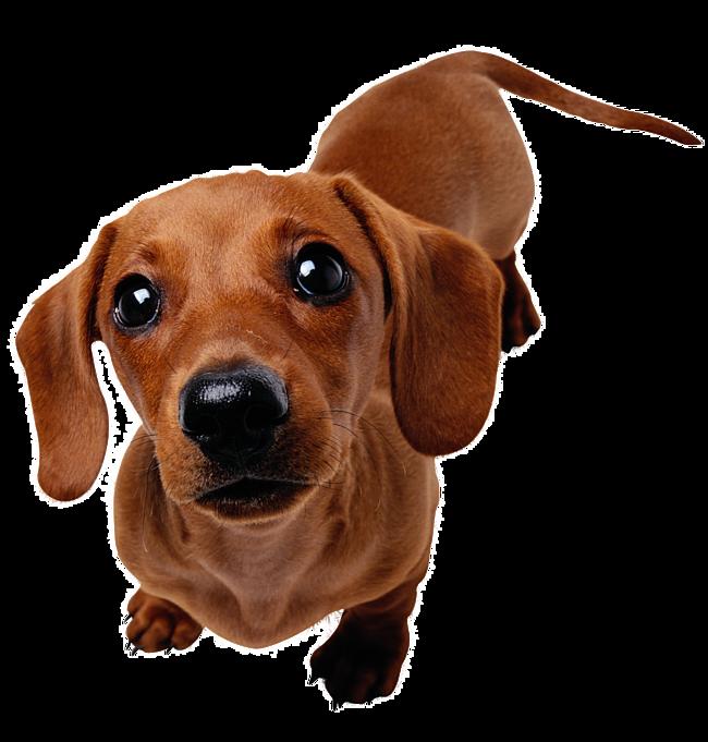 Самые злые породы собак