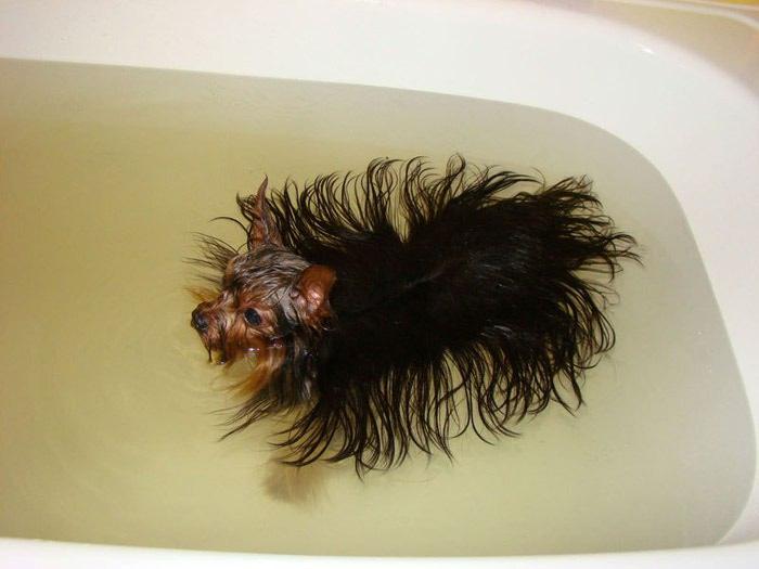 Отзывы как быстро отрастить густые волосы
