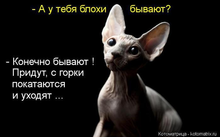 kotomatritsa_6S (700x436, 27Kb)