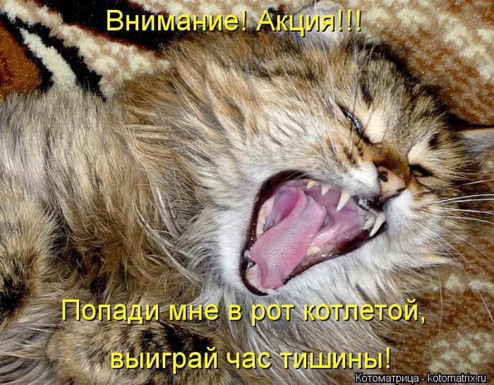 kotomatritsa_hA (700x546, 101Kb)