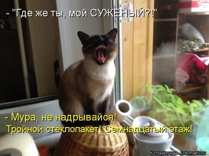 kotomatritsa_K1Q (700x524, 52Kb)