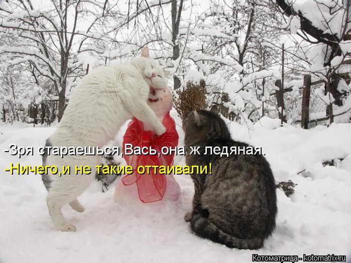 kotomatritsa_ua (700x524, 78Kb)