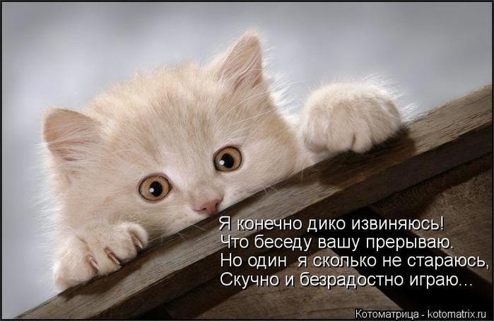 kotomatritsa_ZI (700x454, 47Kb)