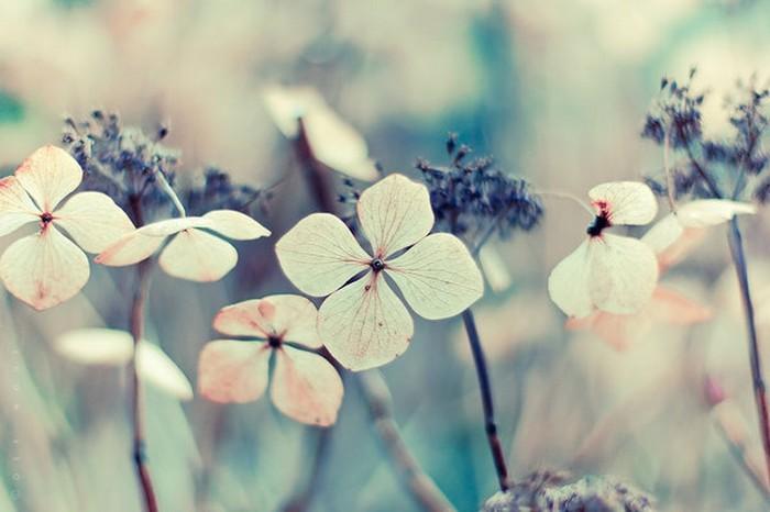 Нежные фото цветов от Oer-Wout 1 (700x466, 60Kb)
