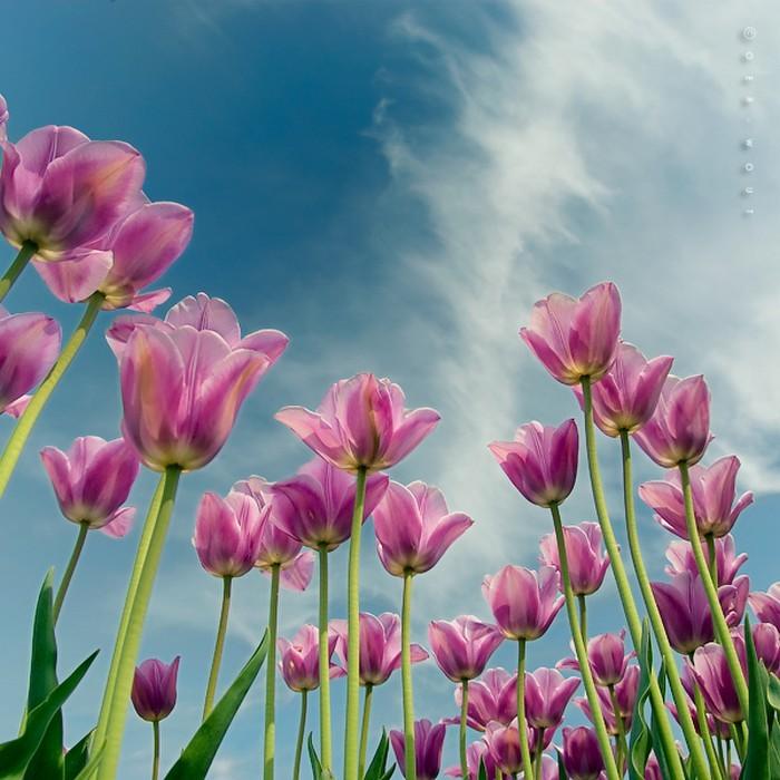 Нежные фото цветов от Oer-Wout 3 (700x700, 111Kb)