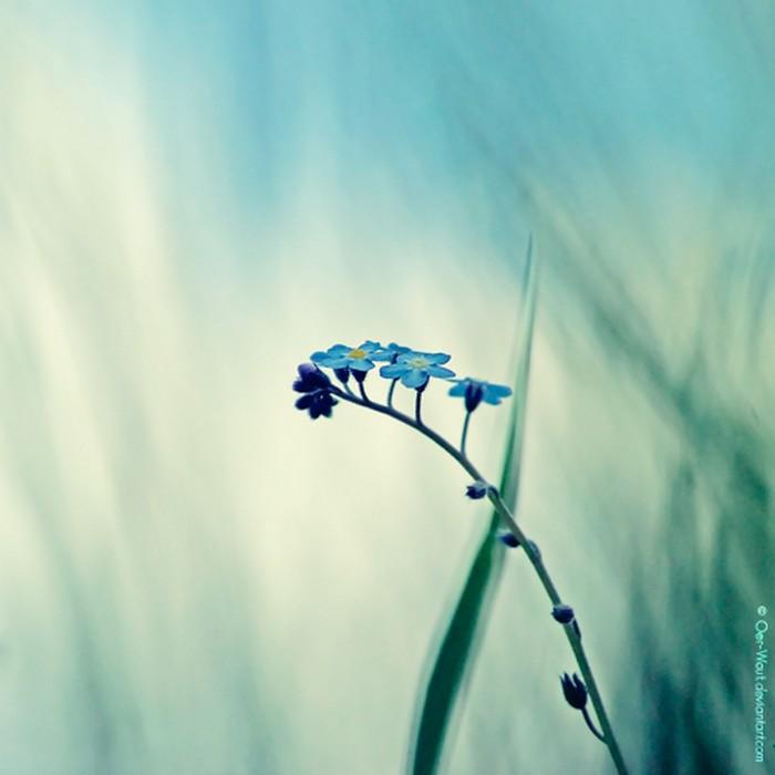 Нежные фото цветов от Oer-Wout 5 (700x700, 57Kb)