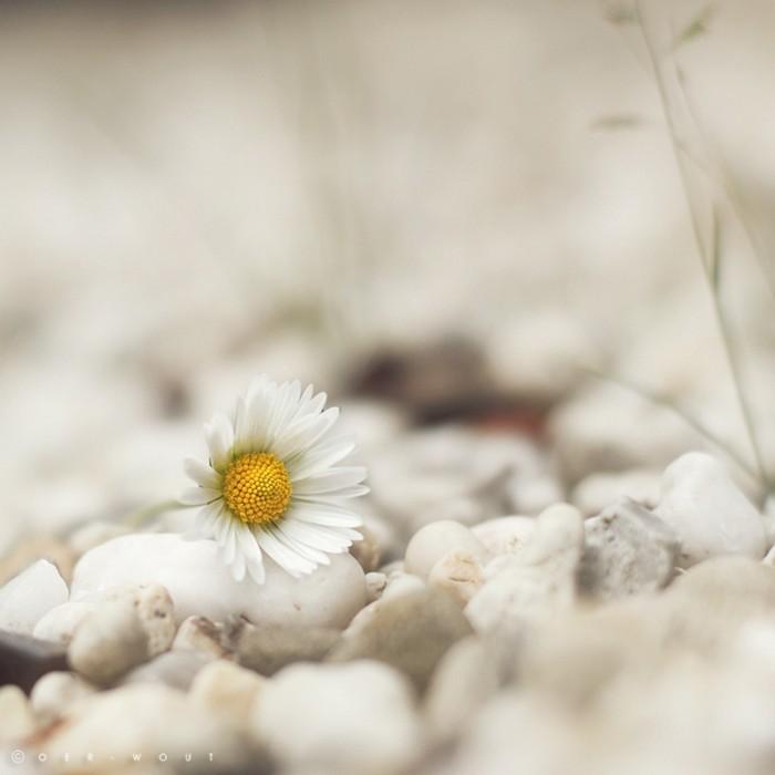 Нежные фото цветов от Oer-Wout 9 (700x700, 50Kb)