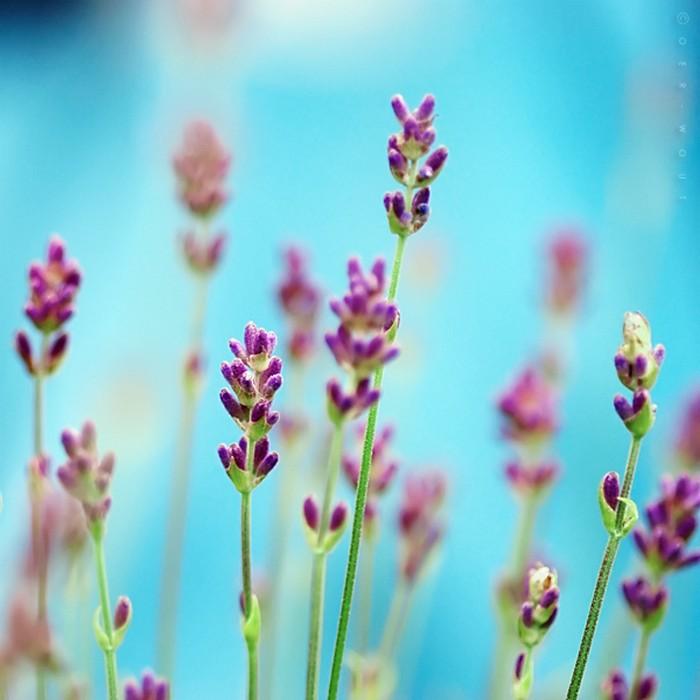 Нежные фото цветов от Oer-Wout 11 (700x700, 72Kb)