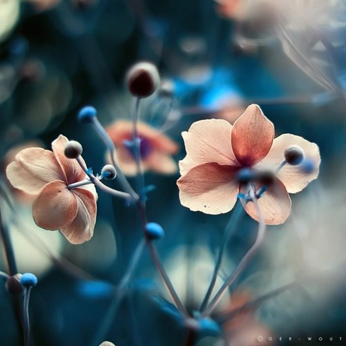 Нежные фото цветов от Oer-Wout 19 (700x700, 78Kb)