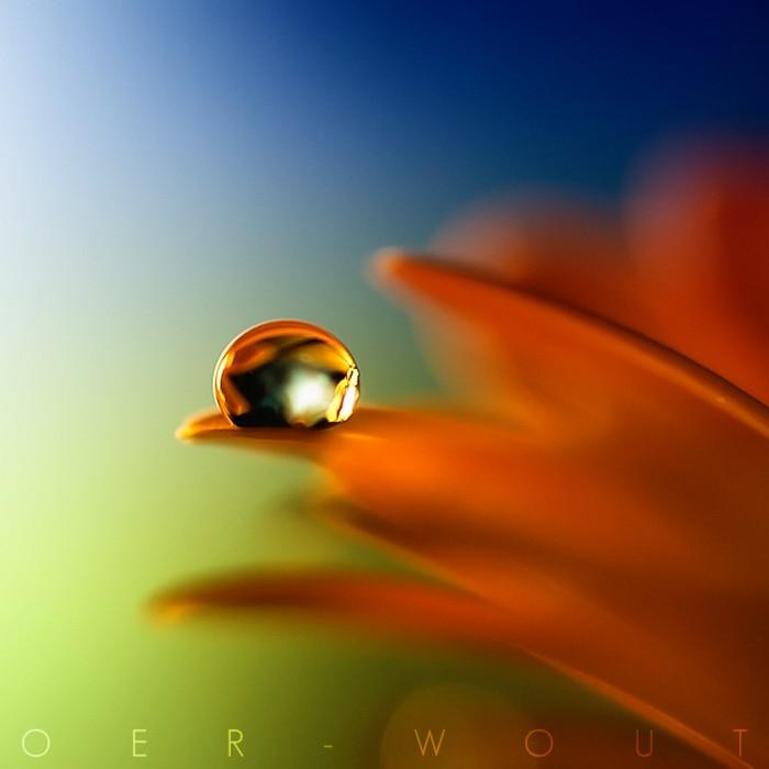Нежные фото цветов от Oer-Wout 21 (700x700, 49Kb)
