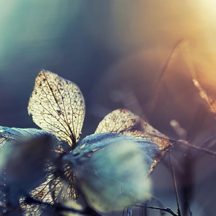 Нежные фото цветов от Oer-Wout 25 (700x700, 81Kb)