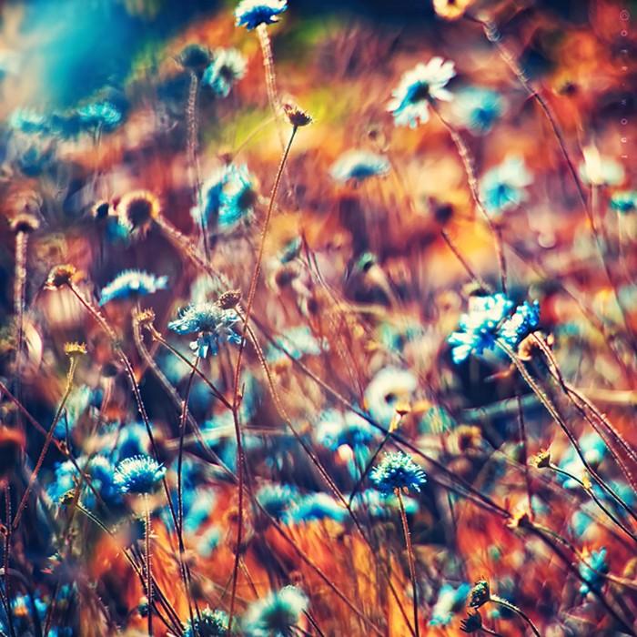 Нежные фото цветов от Oer-Wout 27 (700x700, 153Kb)