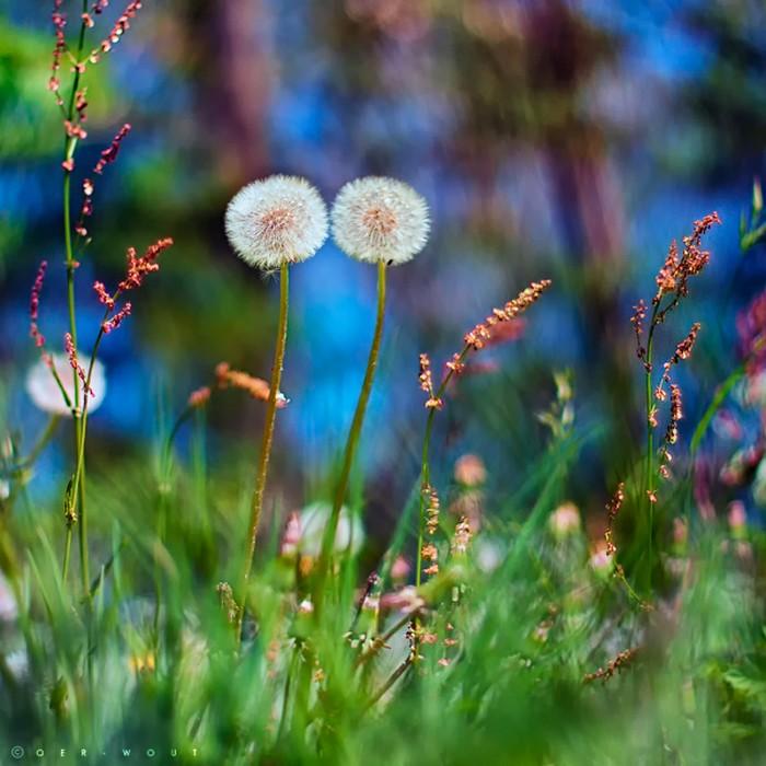 Нежные фото цветов от Oer-Wout 29 (700x700, 104Kb)