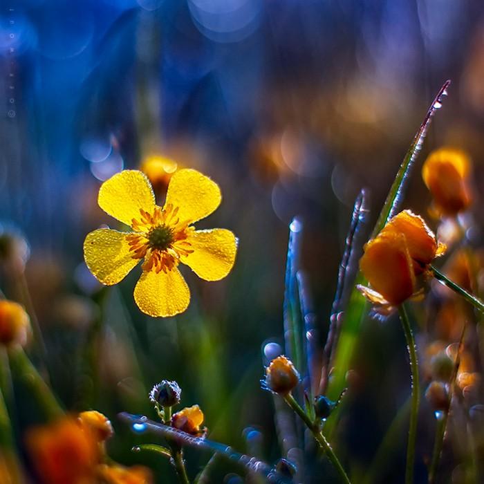 Нежные фото цветов от Oer-Wout 31 (700x700, 94Kb)