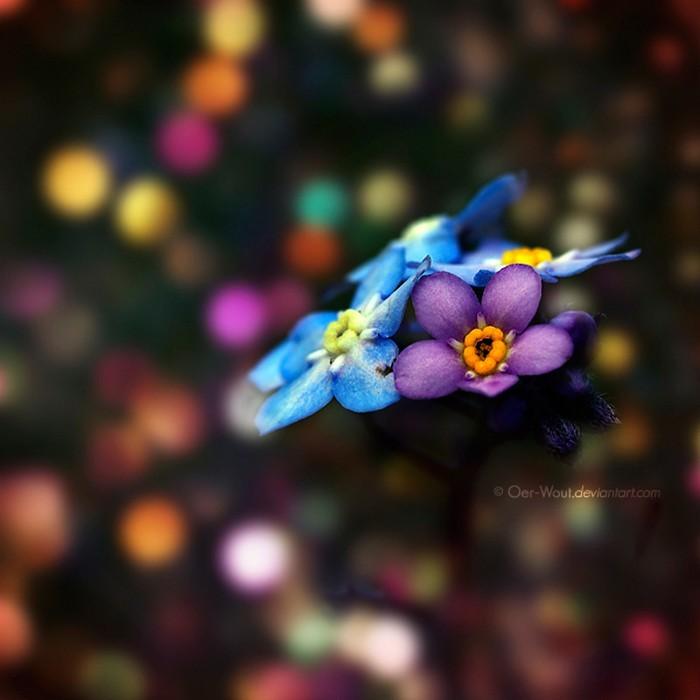Нежные фото цветов от Oer-Wout 33 (700x700, 65Kb)