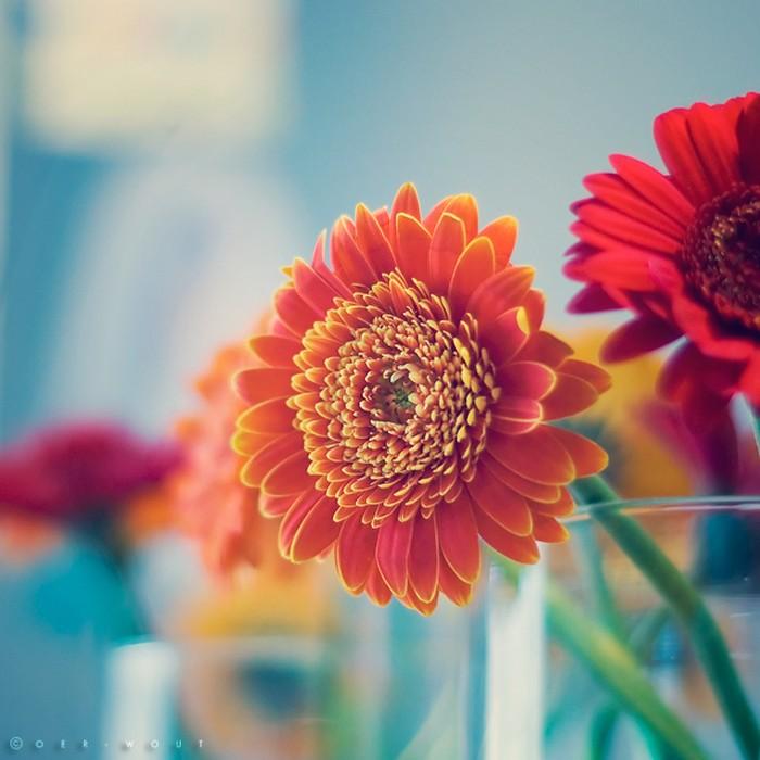Нежные фото цветов от Oer-Wout 35 (700x700, 83Kb)