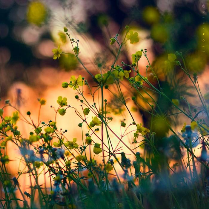 Нежные фото цветов от Oer-Wout 39 (700x700, 136Kb)