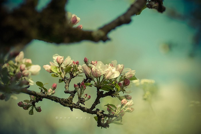 Нежные фото цветов от Oer-Wout 41 (700x466, 66Kb)