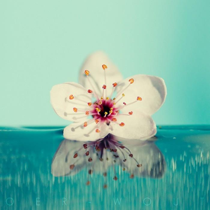 Нежные фото цветов от Oer-Wout 45 (700x700, 71Kb)