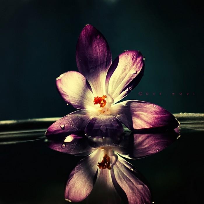 Нежные фото цветов от Oer-Wout 47 (700x700, 75Kb)