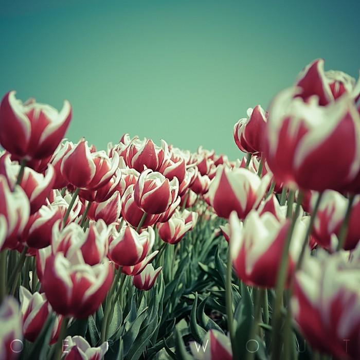 Нежные фото цветов от Oer-Wout 49 (700x700, 104Kb)