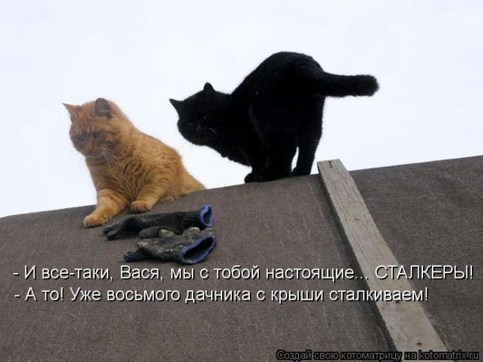 cm_20120706_01198_019 (700x525, 52Kb)