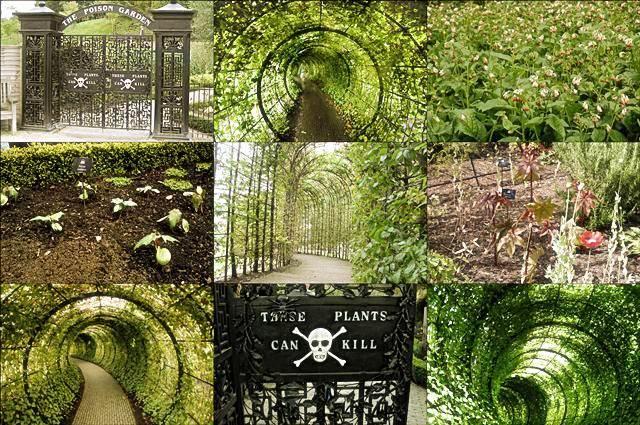 Сад ядовитых растений