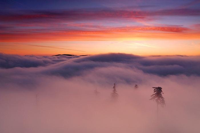 В тумане. Автор Michal Ostrowski. (700x465, 55Kb)