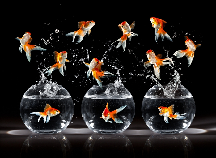 Goldfish (1) (700x511, 209Kb)