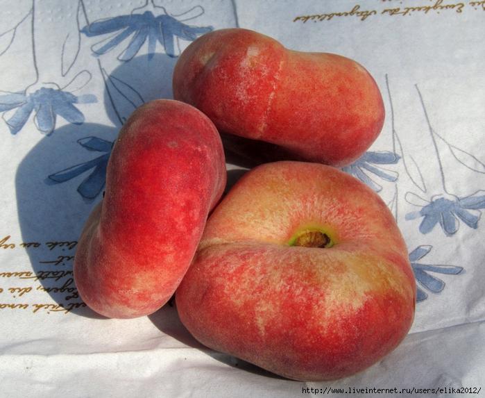 персик фрукт