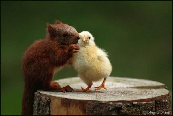 Дружба животных, забавные животные фото, дружба животных фото, дружба между животными