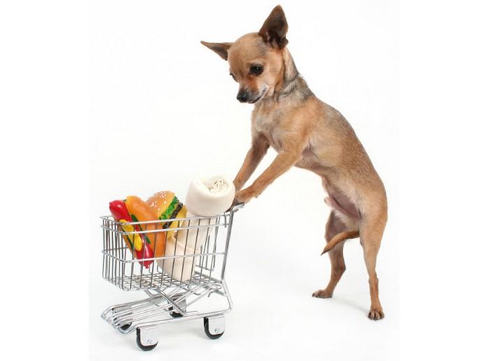 Чем кормить собаку 3 (700x517, 43Kb)
