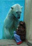 Превью bear,polar,polar,bear,friendship,girl,hiding-45e216a924fcd7d34e530135ba42a6a7_h (351x500, 37Kb)