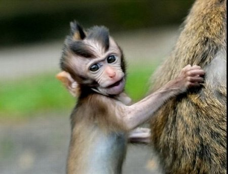 1278844825_monkeys_with_mohawks_09 (450x345, 29Kb)