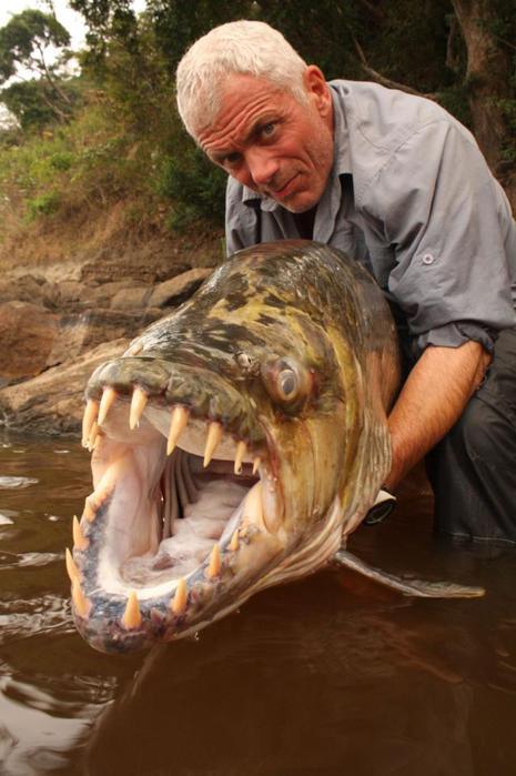 discovery природа,фото дня,огромные рыбы (465x700, 50Kb)