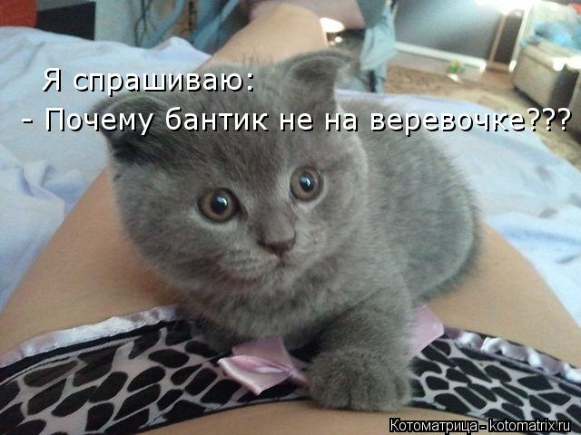 kotomatritsa_Vk (640x480, 49Kb)
