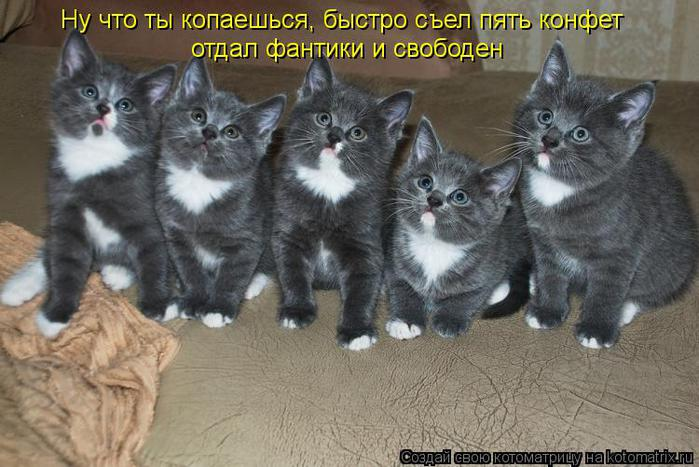 kotomatritsa_n (700x467, 61Kb)