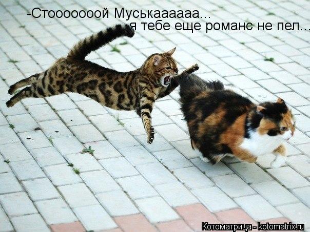kotomatritsa_xc (604x453, 59Kb)