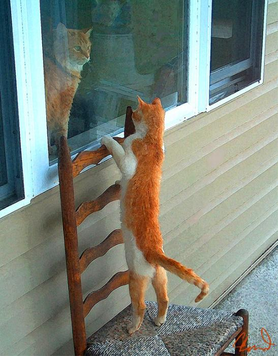 http://img0.liveinternet.ru/images/attach/c/6/89/773/89773714_Cleveland_Barry_Orange_Cats.jpg