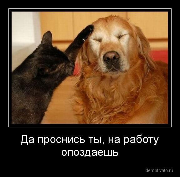 demotivator_1310950359.71 (575x567, 83Kb)
