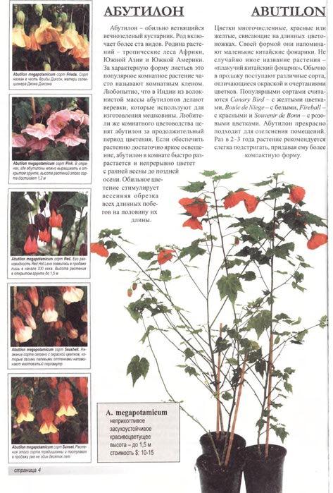дер Неер Я.В. - Все о 100 самых популярных комнатных растениях - 2008_5 (473x700, 83Kb)