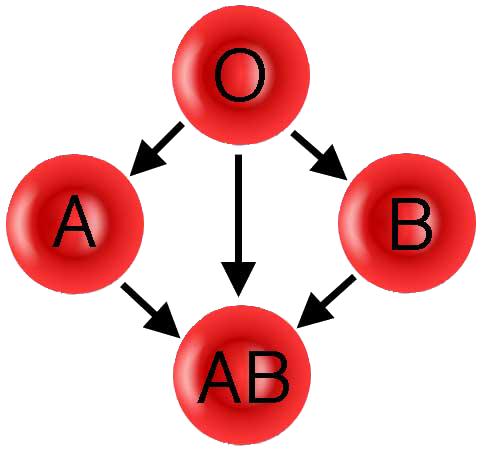 ABO_donation_path (484x453, 96Kb)